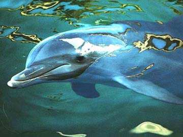 Bottlenose Dolphins wallpapers 2